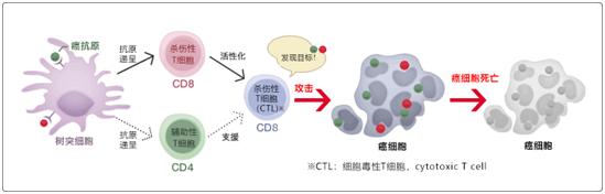 树突细胞疫苗疗法
