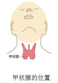 名古屋 甲状腺