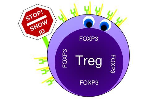 谈谈免疫治疗中的抑制性T细胞(Treg)