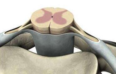 庆应大学获批进行iPS细胞治疗脊髓损伤临床研究计划