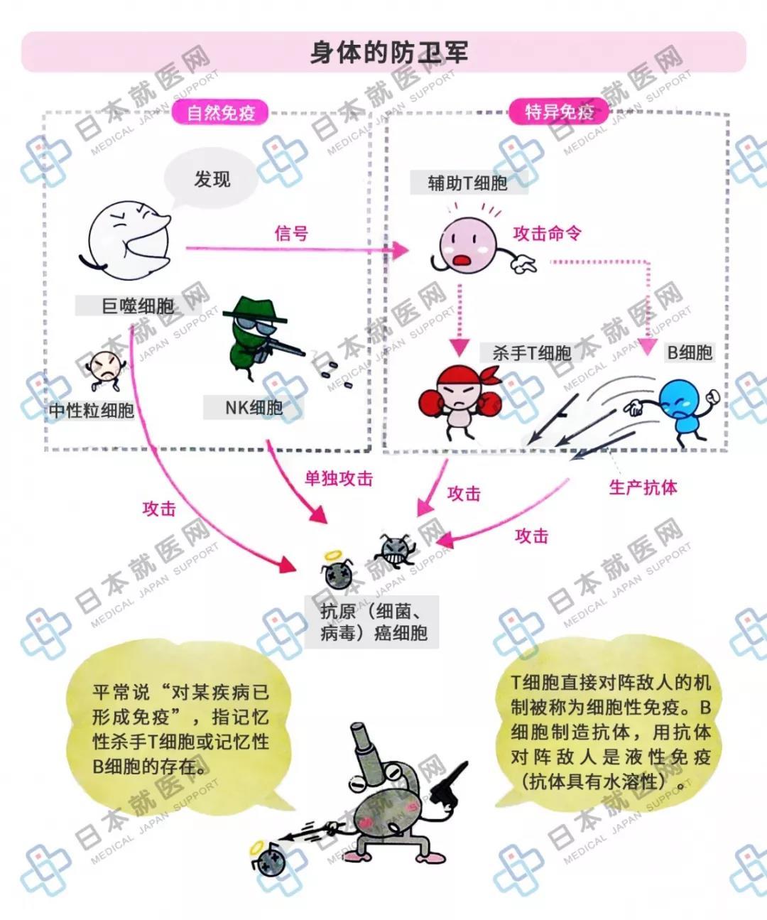 炎症解读3 | 免疫是机体的防御机制