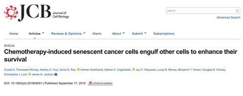 """揭秘:化疗后癌细胞为何""""卷土重来"""""""